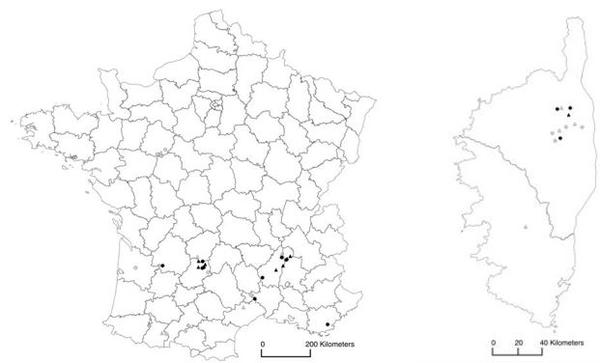 Release sites (2011-2013) and establishment of Torymus sinensis in France