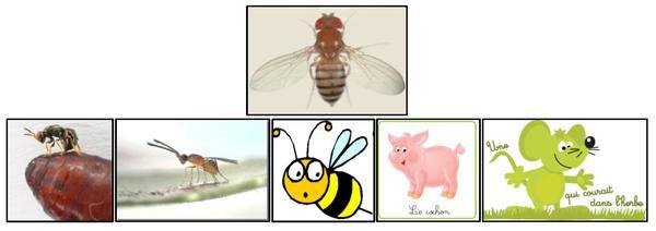 BES Biological models
