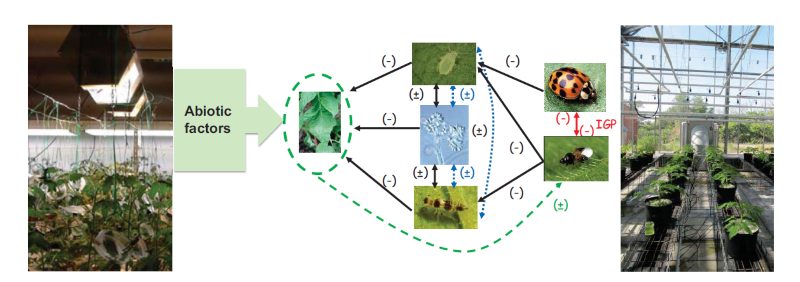 cpoyright Inra 12018 . Schematic diagram of direct and indirect interactions (biotic and abiotic) in the agrosystem tomato-pest-natural enemies. This system is well studied in the 1st and 2nd Research Axes of the CEA team, in laboratory conditions (picture on the left) and in greenhouses (picture on the right).