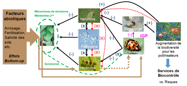 cea_diagramme_fr
