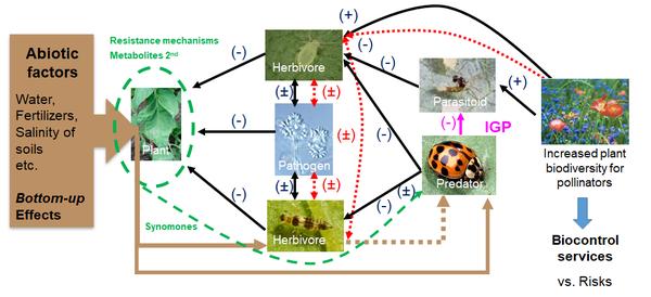 cea_diagramme_gb