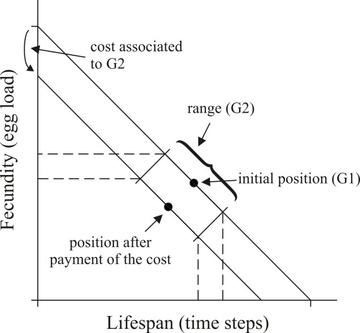 Trade-off between lifespan and egg load describing the main parameters used in the simulation model. The initial reproductive strategy is defined by G1 and each animal has a certain phenotypic plasticity defined by the range G2, but pays a linearly proportional cost for it, both in survival time and egg load.