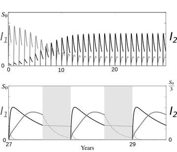 Ecological co-existence of two strains of plant parasites (I1 and I2) through temporal partitioning. Curves are computed from simulations of the seasonal plant epidemic model1,2. Upper panel: epidemiological dynamics over thirty seasons. Lower panel: focus on the stationary solution reached by the epidemic over the last three seasons of the simulation.