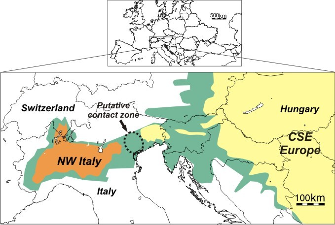 Representation of the two main invasive outbreaks of WCR in Europe, located in north western (NW) Italy and in Central South Eastern (CSE) Europe. The distribution areas of WCR before the contact between the western and eastern outbreaks (in 2007) are shown in orange (NW Italy) and in yellow (CSE Europe).The distribution area after the contact (in 2012) is shown in green. The putative contact zone is represented by the dashed circle.