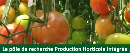 tomates - pôle PHI