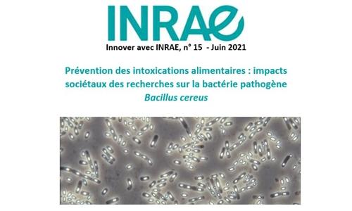Spores de Bacillus cereus pour une actualité INRAE