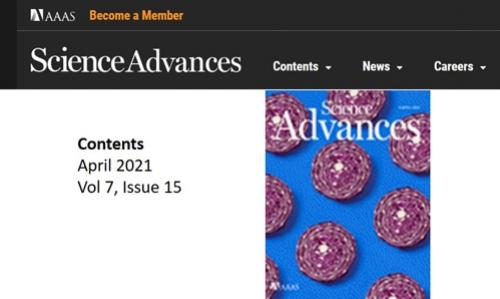 Tranches de choux rouges pour la revue science Advances
