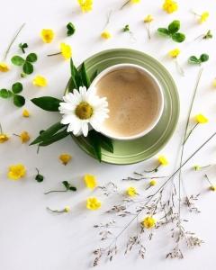 café agro